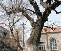 «А древо жизни пышно зеленеет…»
